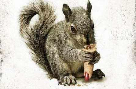 Squirrels-póster