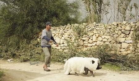"""Crítica de """"Un cerdo en Gaza""""."""